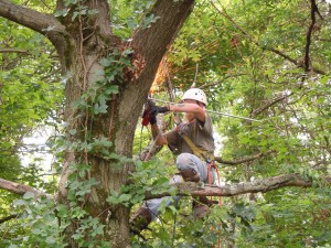 fixing the oak tree_1826